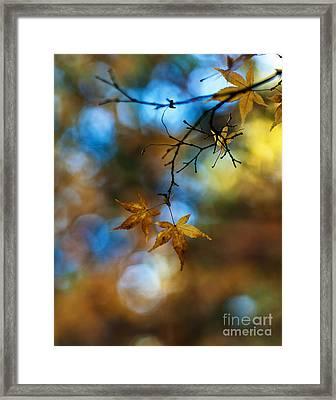 Pearlescent Acers Framed Print
