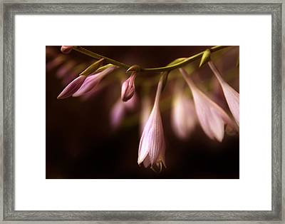 Pearlescent Petals Framed Print by Jessica Jenney