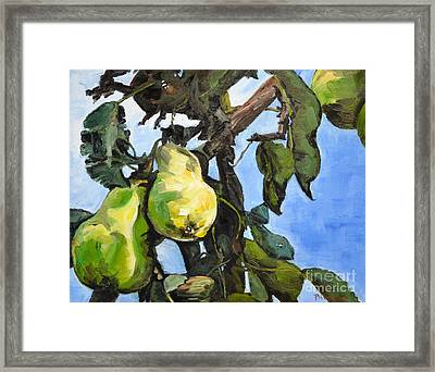 Pears For Picking Framed Print by Lori Pittenger