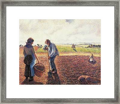 Peasants In The Field Eragny Framed Print by Camille Pissarro