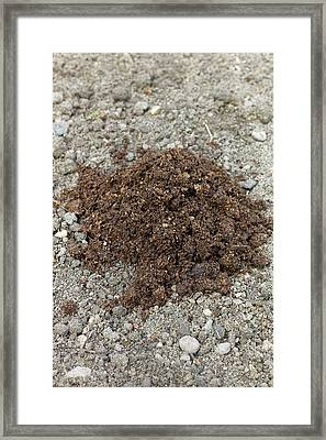 Peat-based Horticultural Compost Framed Print