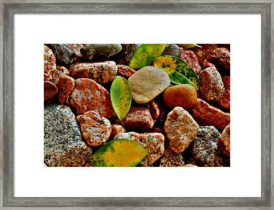 Framed Print featuring the photograph Pebbles And Leaves by Marwan Khoury