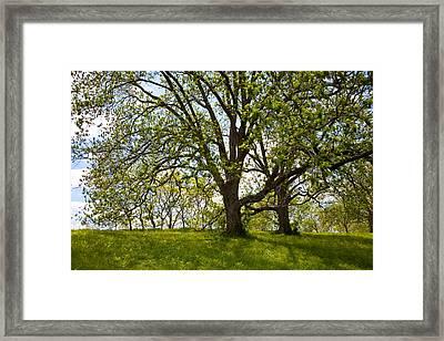 Pecan Grove Framed Print by Mark Weaver