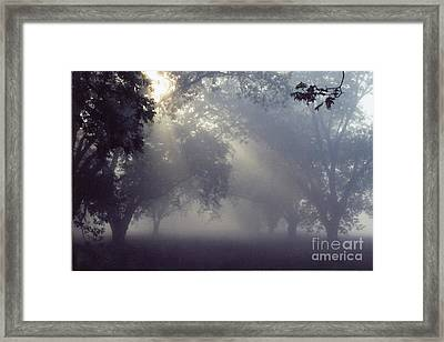 Pecan Grove On A May Morning Framed Print by Debbie Bailey