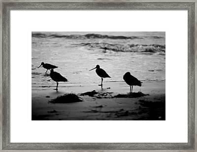 Peckerheads Framed Print by Peter Tellone
