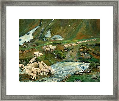 Pecore Framed Print by Niki Mastromonaco