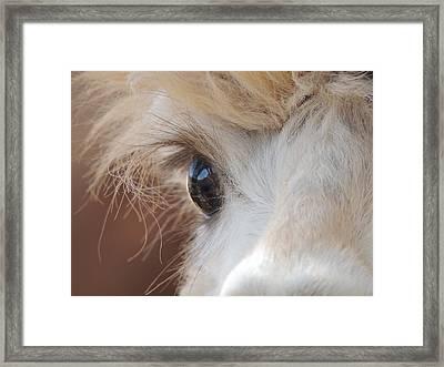 Peek A Boo Alpaca Framed Print