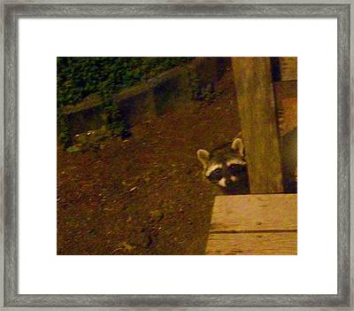 Peek-a-boo Baby Il Framed Print by Jacquelyn Roberts