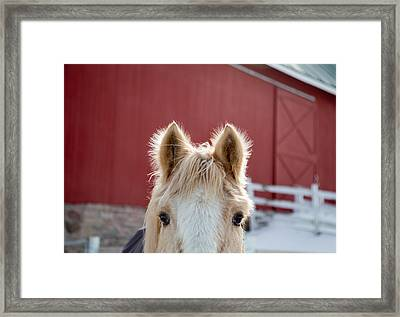 Framed Print featuring the photograph Peek A Boo by Courtney Webster