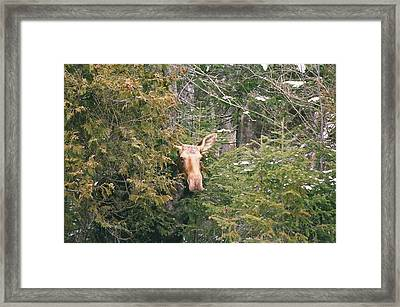 Framed Print featuring the photograph Peek-a-boo by David Porteus