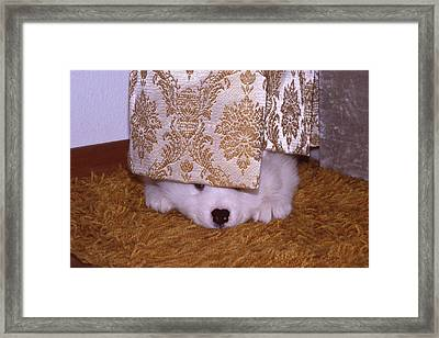 Peek-a-boo Framed Print