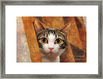 Peek A Boo I See You Framed Print by Andee Design