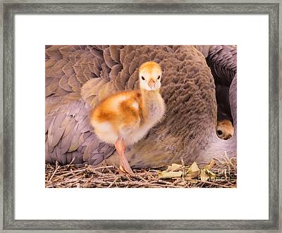 Peek-a-boo I See You Framed Print by Zina Stromberg