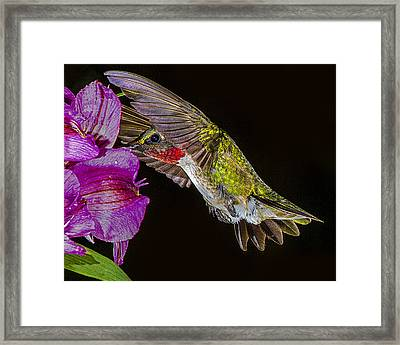 Look - No Hands Framed Print by Janice Carter