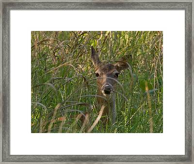 Peek-a-boo Framed Print by John Johnson