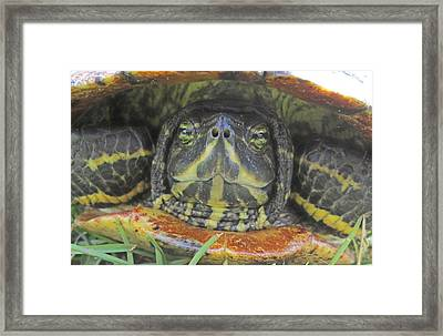 Framed Print featuring the photograph Peek A Boo by Judith Morris