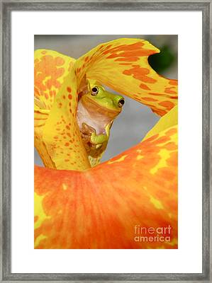 Peek A Boo Framed Print by Kathy Gibbons