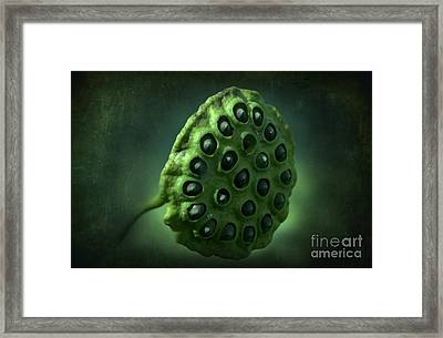Peek A Boo Lotus Framed Print by The Stone Age