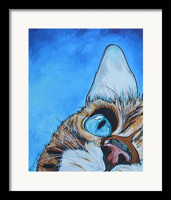 Close-up Of Cat Framed Prints