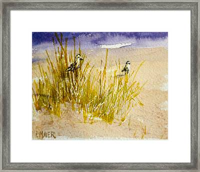 Peek A Boo Framed Print by Pete Maier
