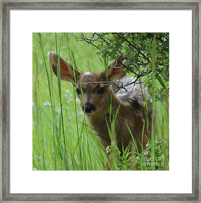 Playing Peek A Boo In Evergreen Colorado Framed Print