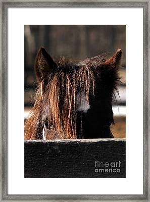 Peek-a-boo Pony Framed Print