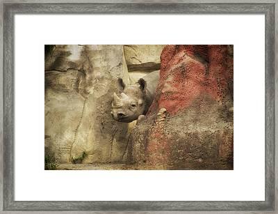 Peek A Boo Rhino Framed Print by Thomas Woolworth