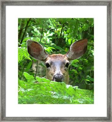 Peek-a-boo Framed Print by Rory Sagner