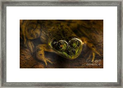 Framed Print featuring the photograph Peek A Boo by Sam Rosen