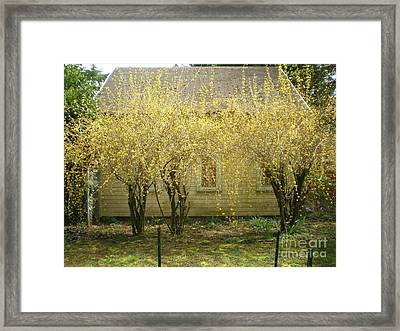 Peek-a-boo Framed Print by Suzanne McKay