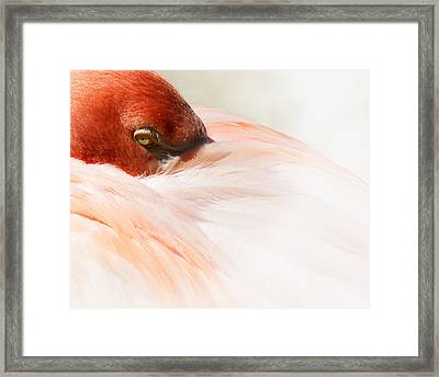 Peek-a-boo Framed Print by Wayne Wood