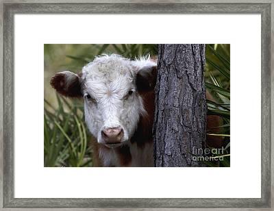 Peek A Moo Framed Print