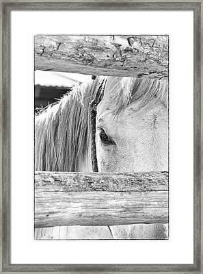 Peek B&w Framed Print by Ramona Murdock
