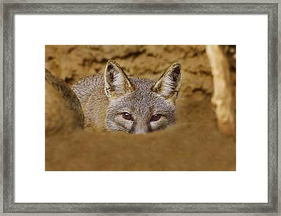 Framed Print featuring the photograph Peekaboo  by Brian Cross