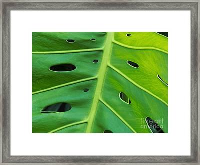 Peekaboo Leaf Framed Print by Ann Horn