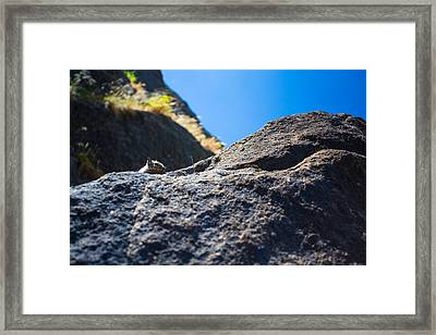 Peekaboo Framed Print by Mike Lee