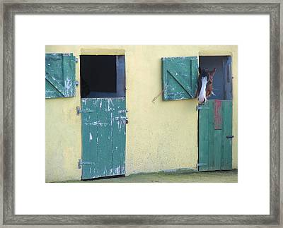 Peekaboo Framed Print by Suzanne Oesterling