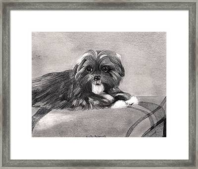 Peekapoo Dog Framed Print by Olde Time  Mercantile