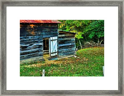 Framed Print featuring the photograph Peeking Calves by Kenny Francis
