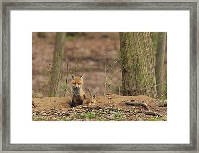 Peeking From The Fox Hole Framed Print by Everet Regal