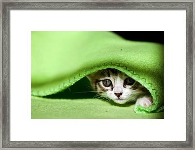 Peeking Framed Print by Jorge Maia
