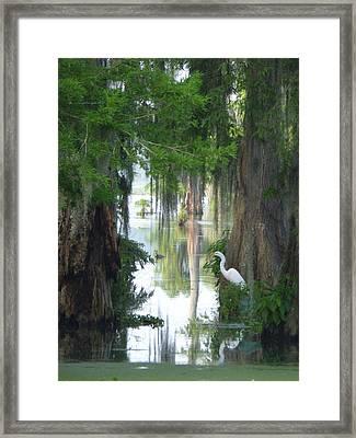 Peeking Thru Natures Swamp Window Framed Print