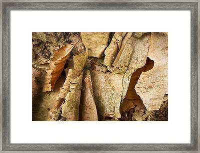 Peeling Framed Print by Jean Noren