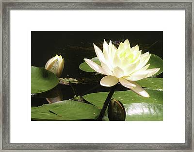 Peeping Frog  Framed Print by Marilyn Carlyle Greiner