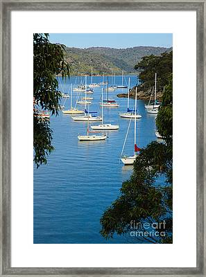 Peeping Through The Trees - Yachts Moored In A Quiet River Framed Print