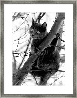 Peeping Tom Framed Print by Mike Flynn