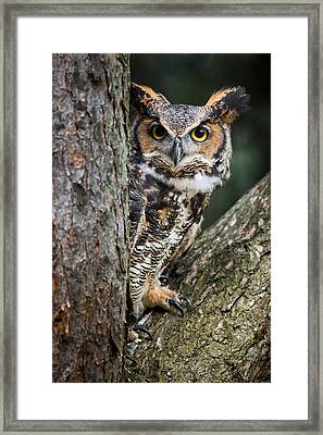 Peering Out Framed Print
