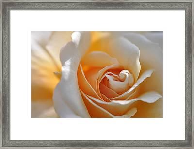 Pegasus Rose  Framed Print by Sabine Edrissi