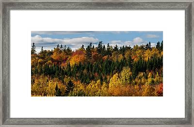 Pei Autumn Trees Framed Print by Matt Dobson