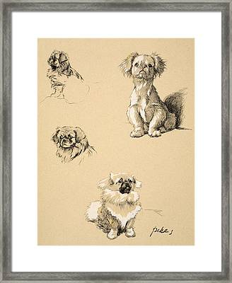 Pekes, 1930, Illustrations Framed Print
